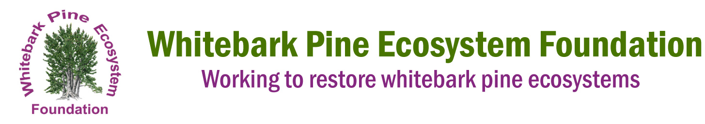 Whitebark Pine Ecosystem Foundation