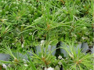 Lolo_Walker_2009_Sow and Grow_Pic